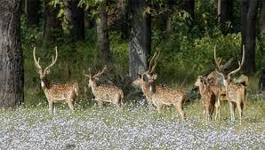 Shuklaphanta Wildlife Reserve-jungle safari